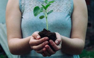 Réponse EcoloPlus Soumagne au questionnaire du Réseau Villes en Transition