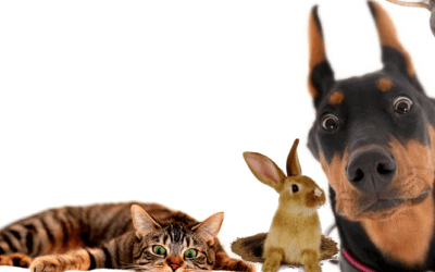 Quelques considérations sur le bien-être animal